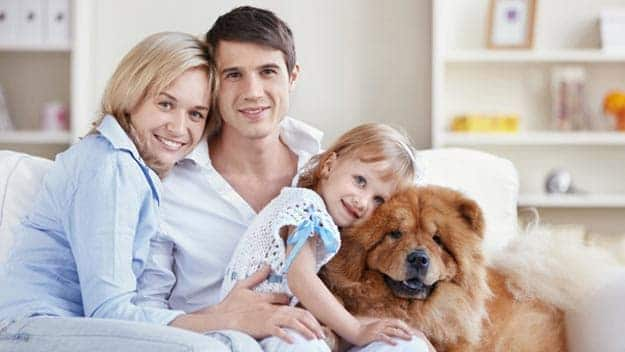 Wills & Trusts dog-young-family Direct Wills West Midlands